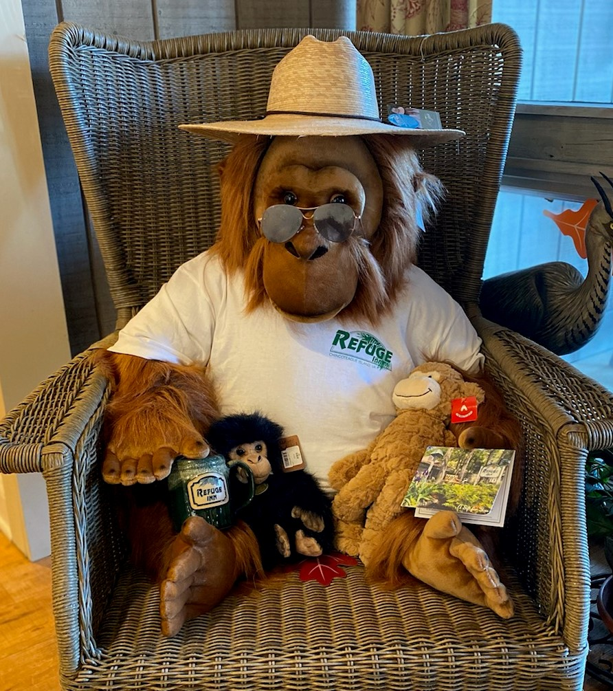 Our orangutan mascot showing off his Refuge Inn t-shirt, mug, and gift card