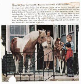 Wild Ponies, The Refuge Inn